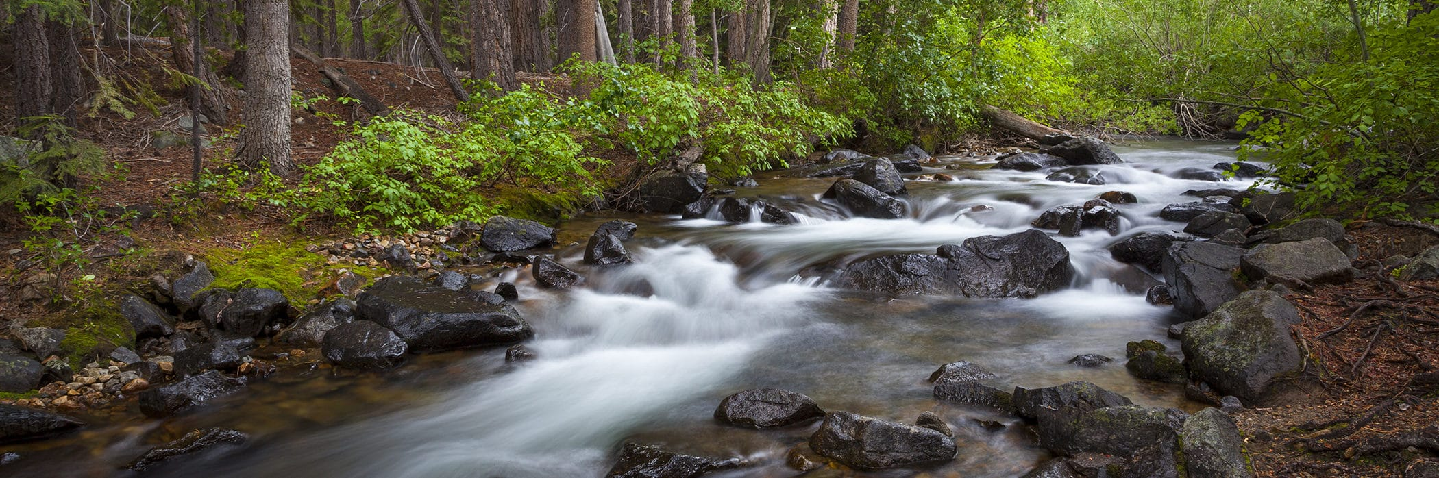 Water rushing over dark wet rocks in a creek with vibrant green vegetation surrounding the streambank and large tree stumps and pine needles along the sides.
