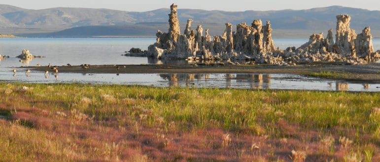 Sunrise light on a grove of tufa towers emerging from the water of Mono Lake with soft green and dusty-red wild grasses in the foreground, Canada geese in the shallow water with reflections of the rocky towers, and desert hills in the distance.