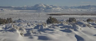 Smooth snow covers sagebrush and other small shrubs in a large open area, with white snowy mountains in the distance.